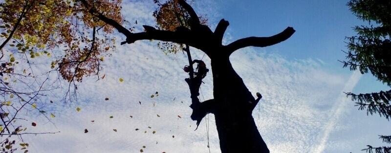 Pílenie stromov
